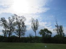 Szalakóta költőhely a Cséffai halastavak és Radványi erdő Natura 2000 területen (Fotó: APM).